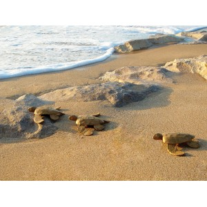 Biodegradable Turtle Keepsakes (Natural Brown)